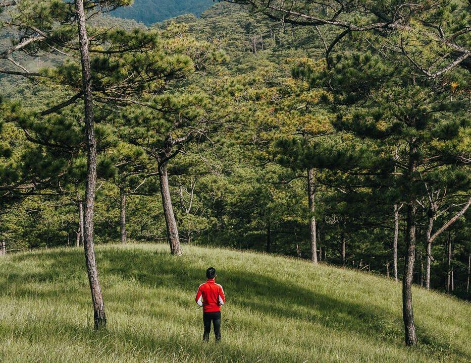 Rừng thông bạt ngàn ở vườn quốc gia
