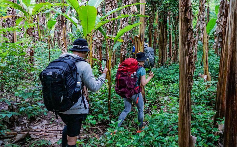 Hành trình xuyên rừng đi qua những bụi cây rậm rạp