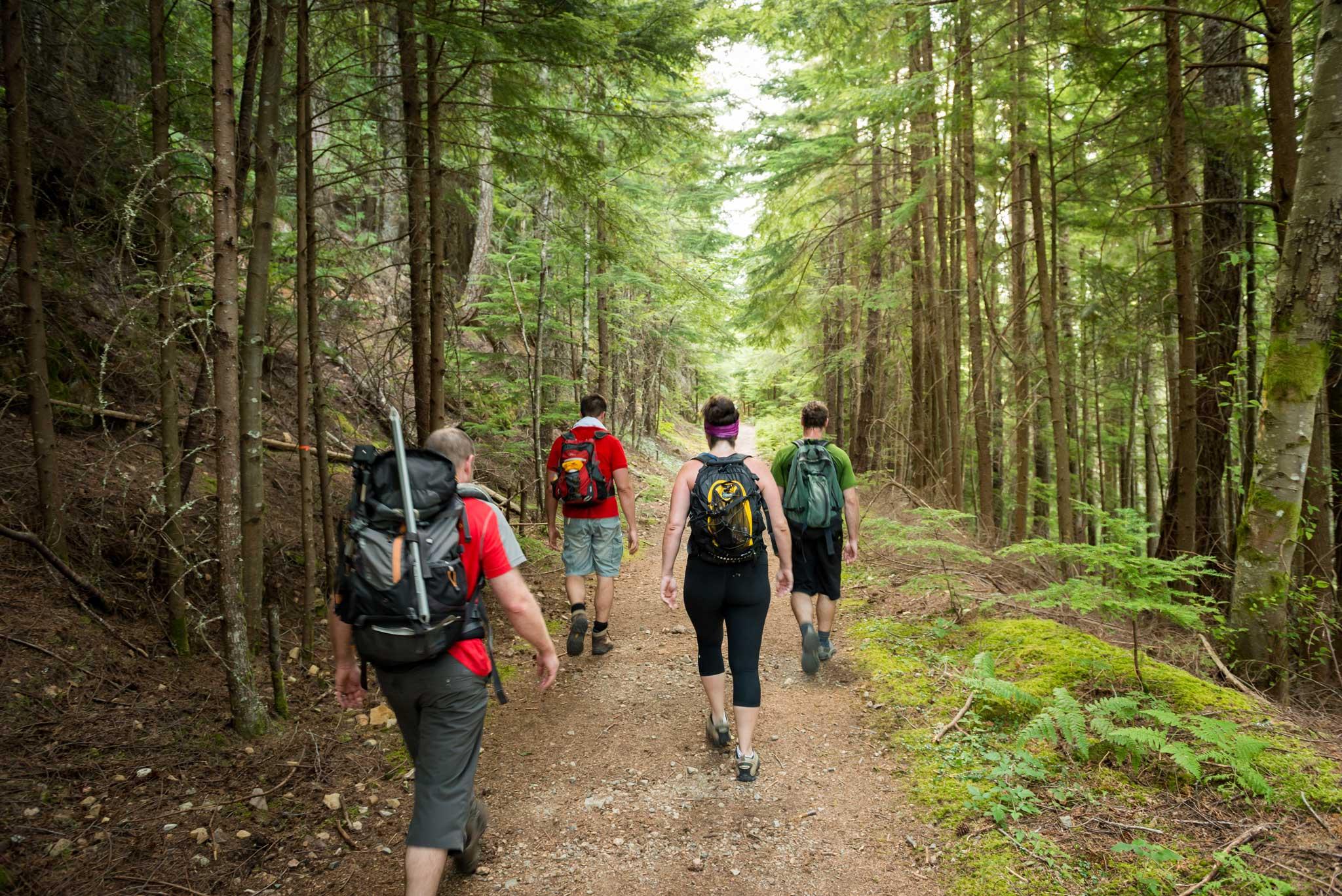 Chuyến đi hiking khám phá rừng