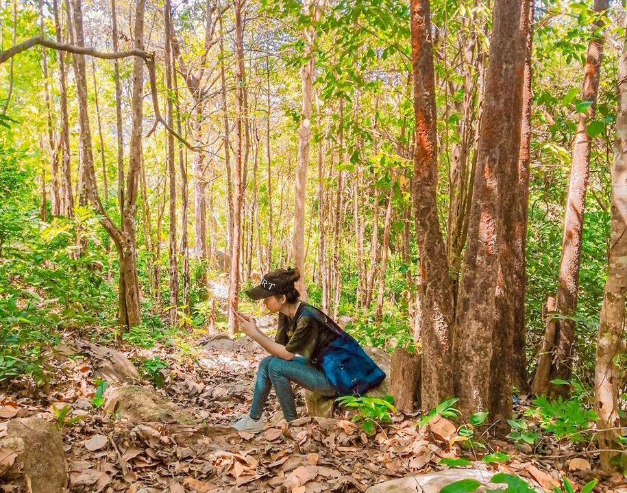 Khung cảnh rừng cây bạt ngàn trên đường leo núi