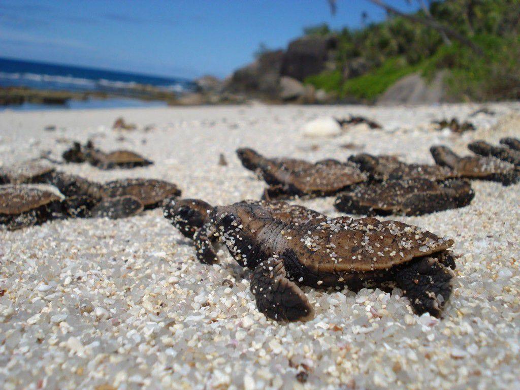 Rùa biển đẻ trứng trên bờ