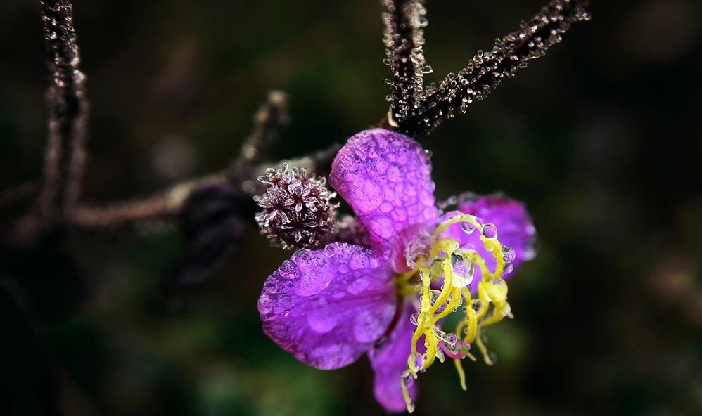 Rừng hoa thủy tinh cực đẹp trên đường đi