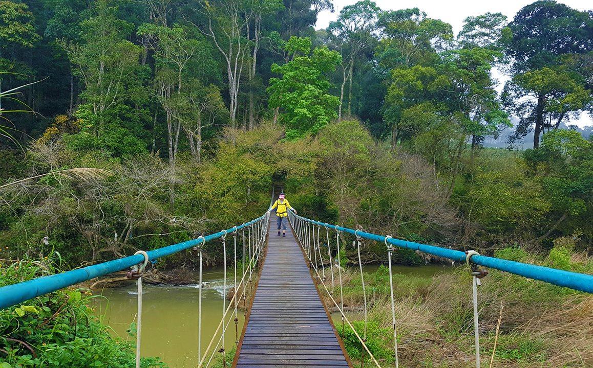 Cây cầu giăng dẫn vào rừng Bidoup
