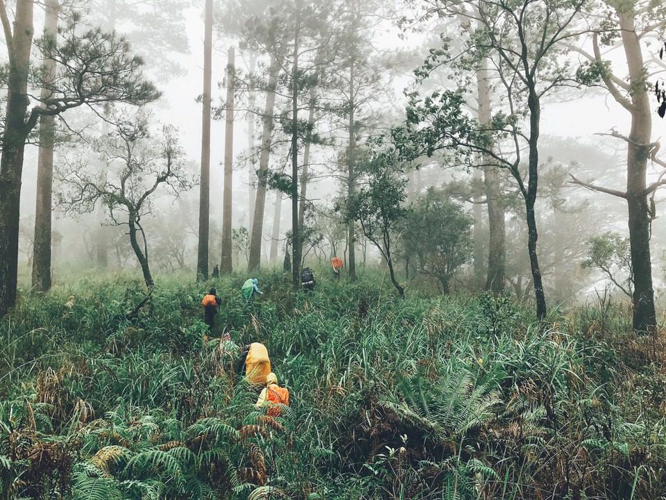 Con đường rừng rậm
