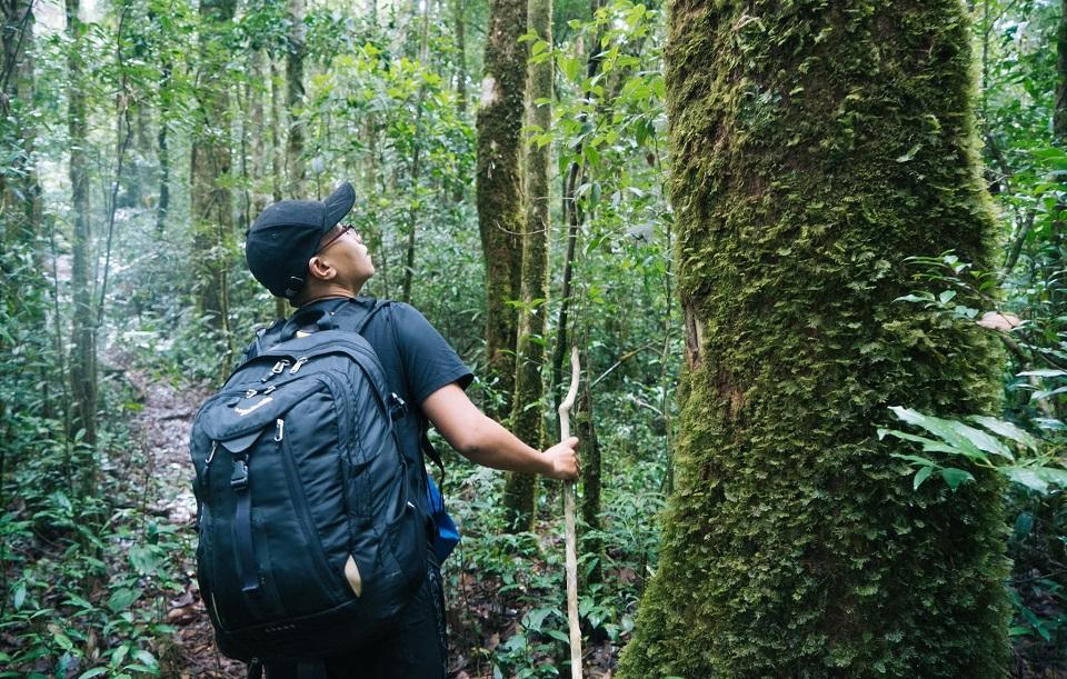 Hệ thực vật vô cùng đa dạng ở rừng nguyên sinh Bidoup
