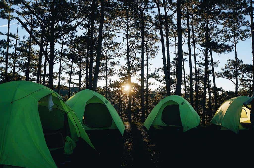 Dựng lều cắm trại trong khu rừng thông