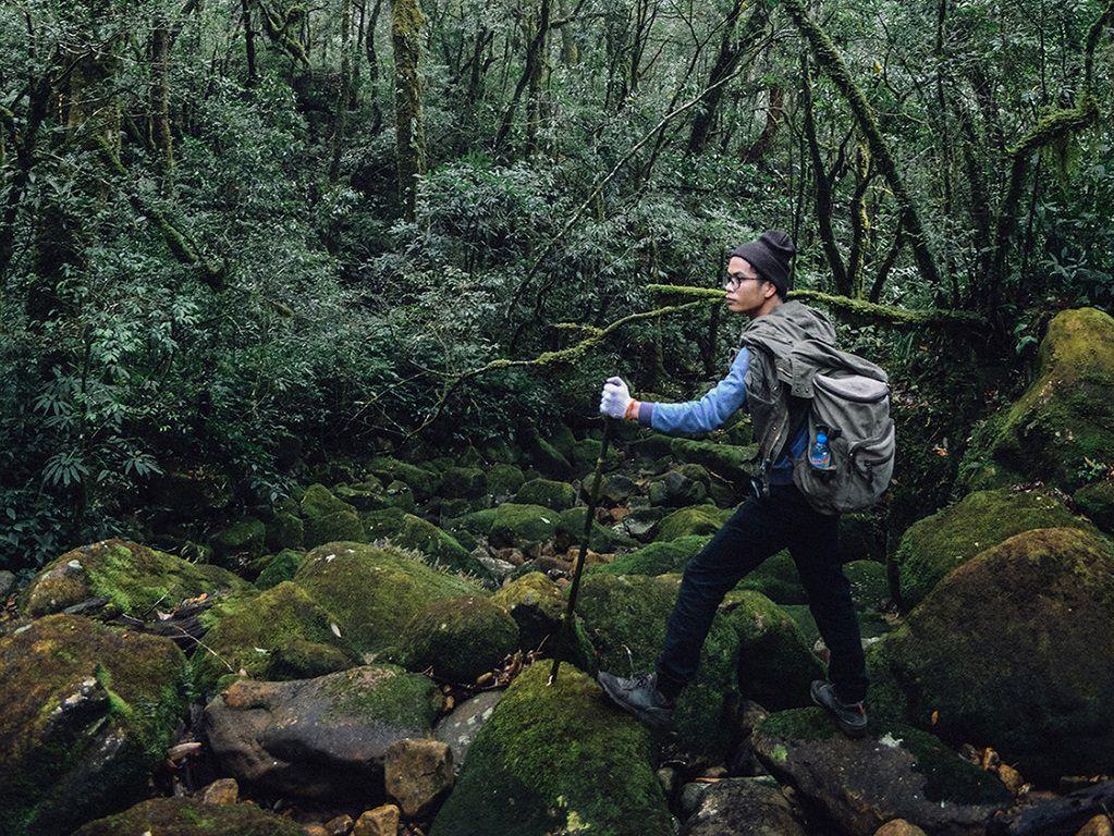 Đường đi xuyên rừng