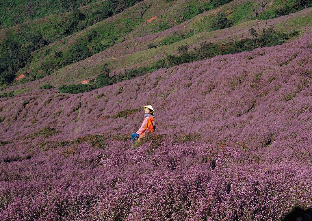Cánh đồng hoa tím Chi Pâu