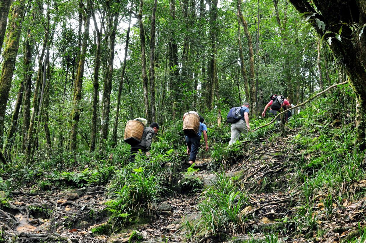 Đường đi xuyên rừng để tới đỉnh Fansipan